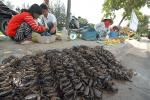 ĐBSCL: Cận Tết, các loài thủy sản nước ngọt tăng giá mạnh