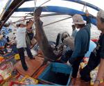Phát triển các vùng biển dựa trên lợi thế và điều kiện tự nhiên