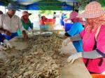 Thái Lan: Sản lượng tôm có thể giảm 3%