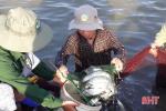 Lãi hơn nửa tỷ đồng từ nuôi tôm xen cá