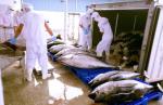 Xuất khẩu cá ngừ tăng 10% năm 2018