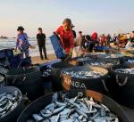 Hệ sinh thái vùng biển ven bờ suy giảm: Đà Nẵng có bỏ lơ Sơn Trà?