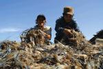 Sản lượng tôm nuôi toàn cầu sẽ đạt 8 - 9 triệu tấn vào năm 2025