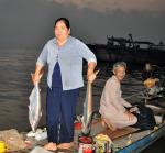 ĐBSCL: Cá bông lau bán giá cao