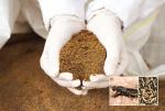 Thức ăn thủy sản: Thách thức thay thế bột cá