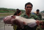 Độc đáo: Nuôi cá nheo du nhập từ Mỹ, nông dân lãi cao gấp 3 lần