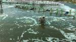 Sản lượng thủy sản 6 tháng tăng 1,4%