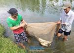 Hộ nuôi cá nước ngọt được mùa