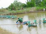 Tăng cường phòng, chống dịch bệnh động vật thủy sản trên địa bàn Thành phố