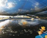 Nam Định: Nuôi tôm công nghiệp trong bể xi măng