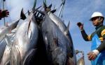 3,5 tỷ USD xuất khẩu hải sản và chiếc 'thẻ vàng' của EU