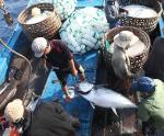 Vai trò của Hội Nghề cá và ngư dân trong bảo vệ chủ quyền biển, đảo