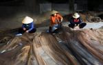 Quận Đồ Sơn: Thiếu hụt lao động thủy sản