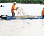 Tạo khác biệt cho cá tra Việt Nam