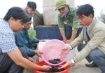 Ninh Bình: Hỗ trợ 5000 con cá giống thực hiện mô hình nuôi cá mú thương phẩm bổ sung thức ăn công nghiệp