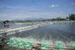 Quảng Ngãi: Giải pháp nuôi trồng thủy sản năm 2019