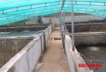 Thanh Hóa: Hiệu quả bước đầu của mô hình nuôi tôm trong bể xi măng