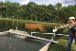Tiềm năng nuôi cá điêu hồng tại Honduras