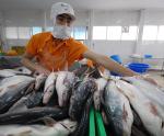 COVID-19 tạo thêm xu hướng tiêu cực cho ngành cá tra