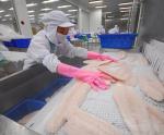 Hạn ngạch giảm, thương mại cá thịt trắng đảo chiều
