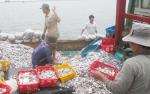 Thừa Thiên Huế: Siết chặt nạn giã cào với chuyển đổi nghề phù hợp