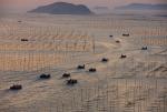 Trung Quốc rầm rộ nuôi cá tra