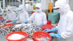 Tận dụng thuận lợi từ các FTA, tôm Việt Nam tăng xuất khẩu sang Nhật Bản