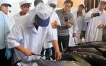 Xuất khẩu cá ngừ của Việt Nam có tăng sau khi VJEPA có hiệu lực?