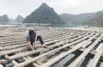 Có được nuôi trồng thủy sản trong khu vực Vịnh Hạ Long?