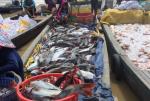 Đồng Nai: Cá nuôi bè chết hàng loạt, người nuôi gặp khó