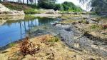 Ô nhiễm vì chất thải nuôi tôm