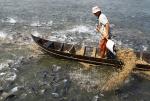 Lo âu bao trùm vùng nuôi cá tra