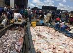 Yêu cầu xác định nguyên nhân cá chết trên sông La Ngà