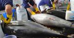 Xuất khẩu cá ngừ sang Nga: Tiềm năng nhưng cần nhiều điều chỉnh