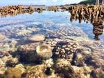 Bảo tồn giá trị đa dạng sinh học biển Lý Sơn