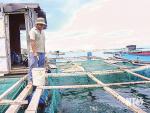 Giải pháp phát triển nghề nuôi tôm hùm và cá biển theo hướng bền vững