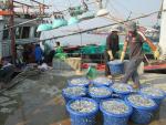Quảng Trị: Sản lượng khai thác thủy sản 6 tháng đầu năm đạt hơn 13.000 tấn