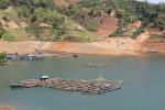 Sơn La: Chiềng Bằng mở rộng mô hình nuôi trồng thủy sản