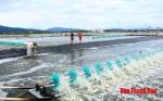Thực hiện các giải pháp bảo vệ nuôi trồng thủy sản trong điều kiện nắng nóng
