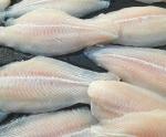 Cơ hội cá tra trên đất nước tỷ dân