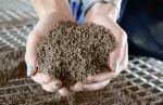 Sản xuất thức ăn tôm thu hút đầu tư