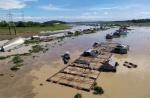 Xử lý tình hình cá chết trên sông La Ngà