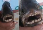 Bắt được loài cá kì lạ có hàm răng giống loài người