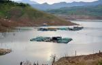 Chết cá tự nhiên ở hồ thủy điện, người nuôi cá lồng bè lo lắng về nguồn nước