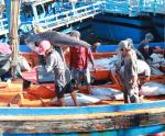 Tháo gỡ vướng mắc trong khai thác thủy sản