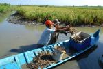 Thủy sản thích ứng biến đổi khí hậu