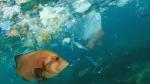 Môi trường biển đang bị rác thải nhựa tấn công sự sống