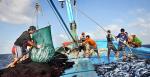 Sản lượng thủy sản trong tháng 7 tăng 4,6%