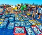 Hội Nghề cá Việt Nam: Kiến nghị giải pháp tháo gỡ khó khăn