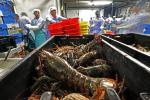 Trung Quốc -Mỹ: Thương mại thủy sản tê liệt sau đòn thuế